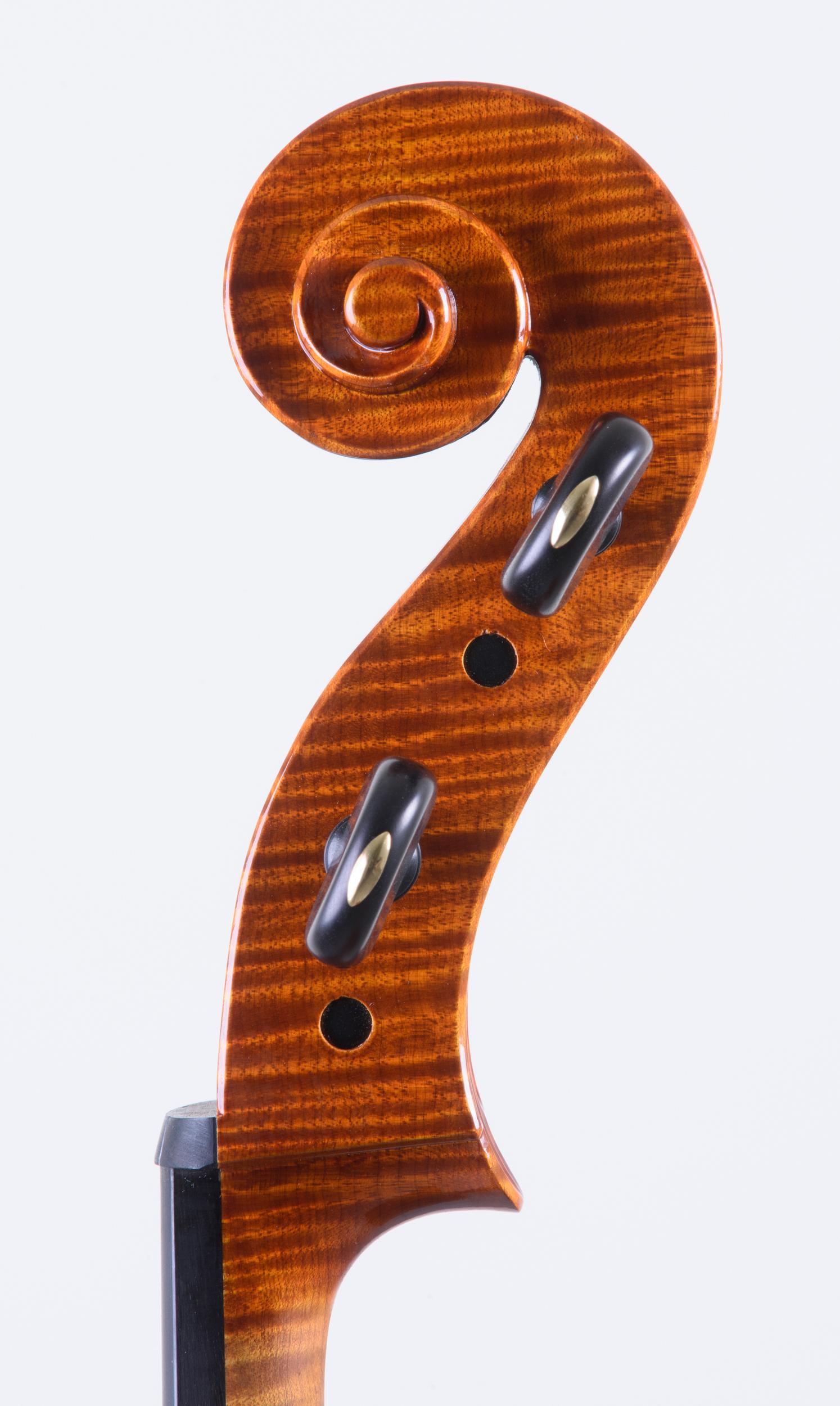 Dario Segala Cello testa