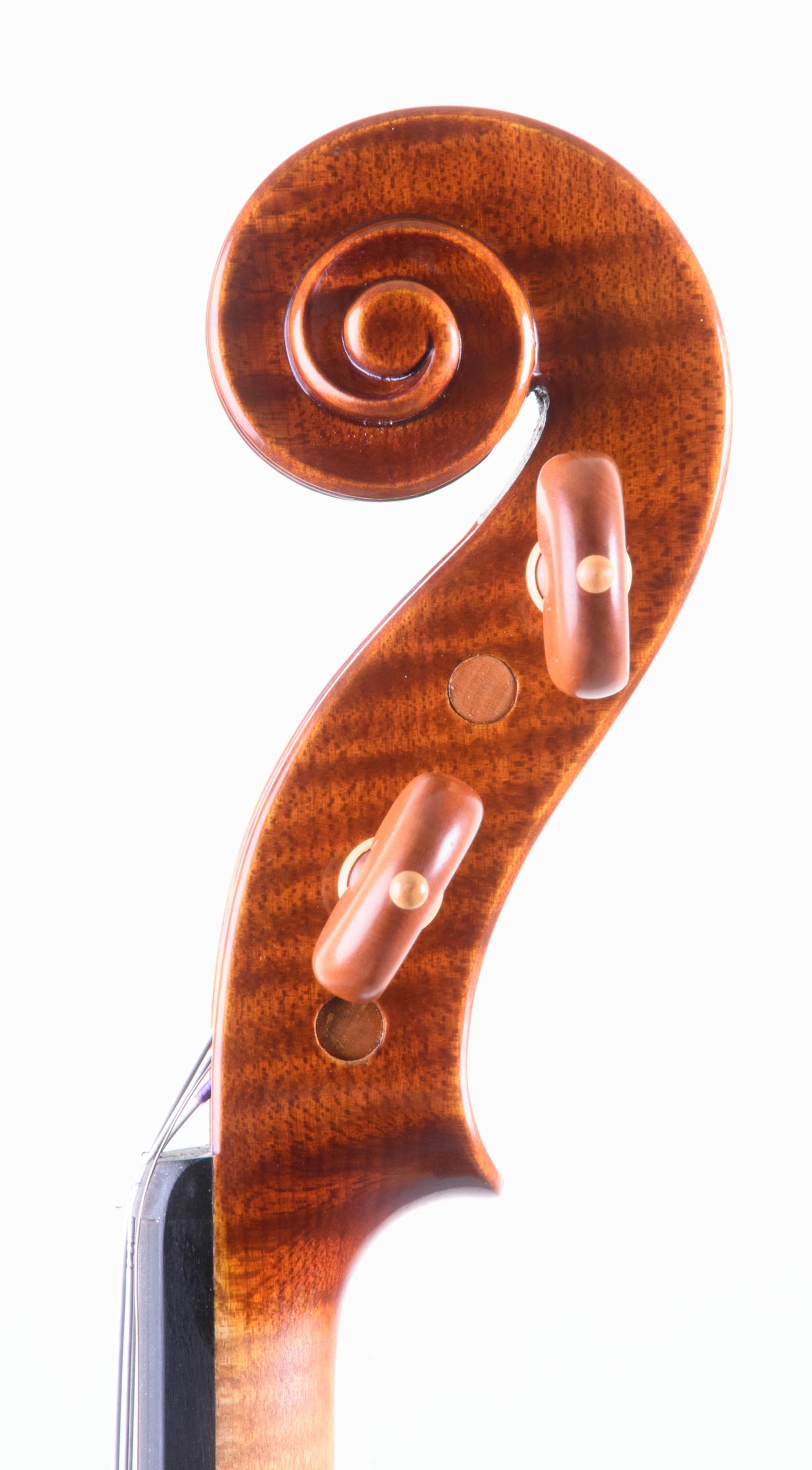 Dario Segala violino testa